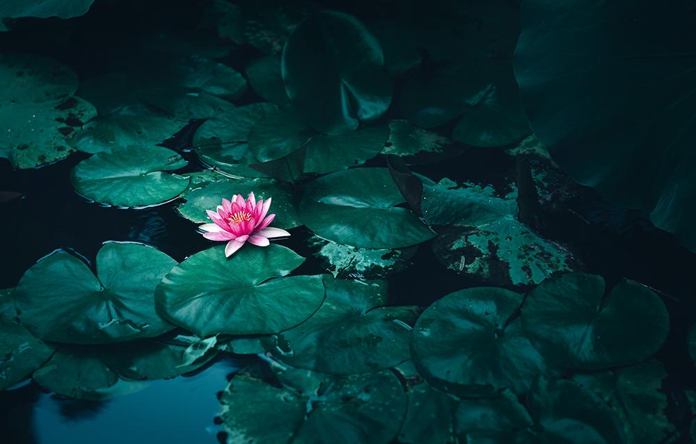 Les valeurs du Centre de Bien-être et de beauté Après la pluie